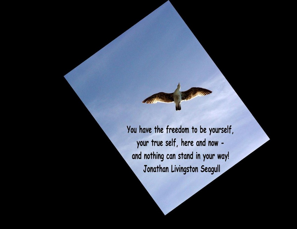 Jonathan Livingston Seagull Flying Full HD Wallpapers Large HD
